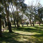 Foret mixte du Golf d'Hossegor, chênes lièges (Quecus suber) sur le 10, devant le Club-House