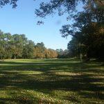 Couleurs d'automne sur le Golf ou se détachent les 3 espèces de cette forêt mixte.En haut les pins puis l'ocre des chênes et plus bas le vert des chênes-lièges