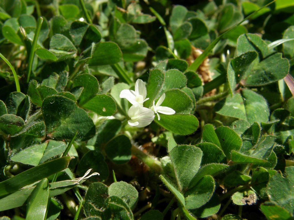 Flore et Végétation du Golf d Hossegor   Golf Hossegor 3f9f4853f53