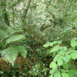 le sous-bois nous indique l'état de conservation de la forêt.